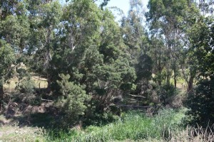 Riparian Works on Crown Land