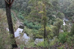 An impression of the Thomson River Fishway