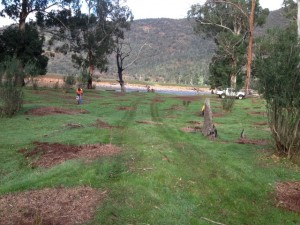 Revegetation work on the Macalister River