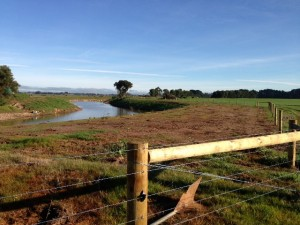 Revegetation and fencing on the Avon River