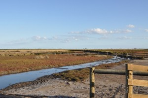 Fenced Coastal Saltmarsh