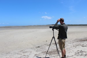 Planning works at one of the saltmarsh sites