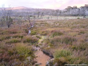 Alpine Peatlands