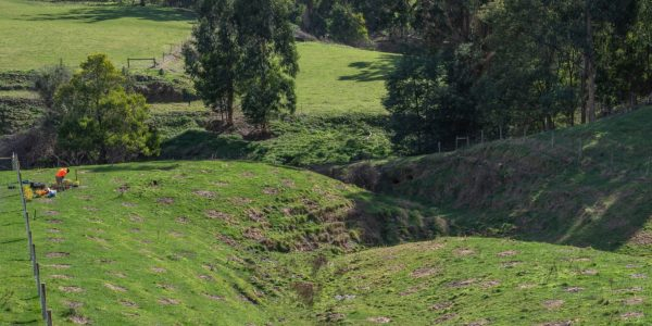 Trees are being planted at this Toora North property, to help eliminate erosion.