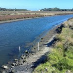 The gauge board sticking out of the water at Powlett River Estuary