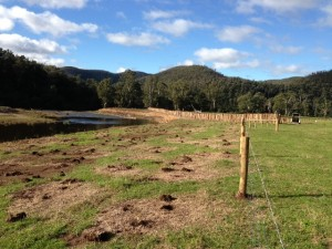 Pilefileds, fencing and revegetation on the Macalister River