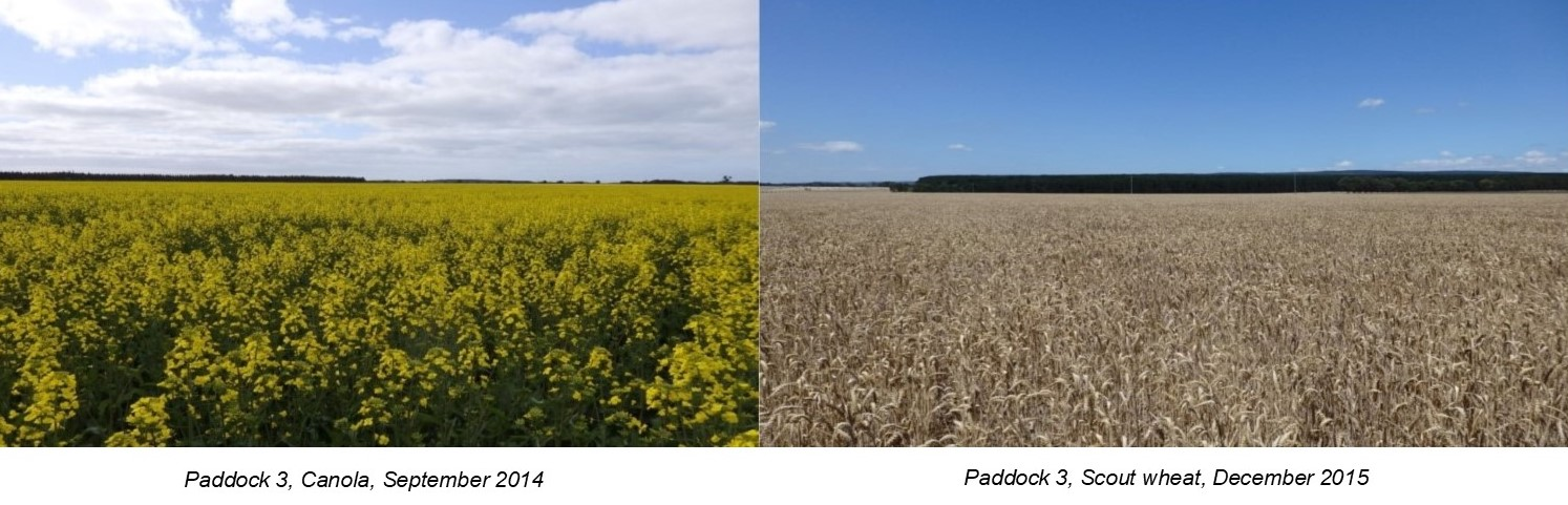 Paddock 3 in 2014 and again in 2015