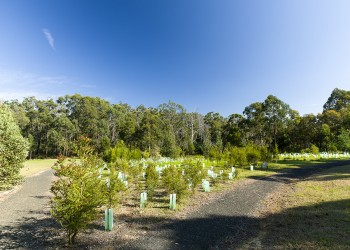 Revegetation at Old Mill site