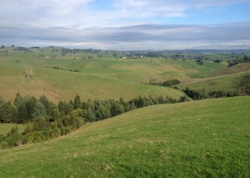 Gullies revegetated by Mount Worth and Districts Landcare Group