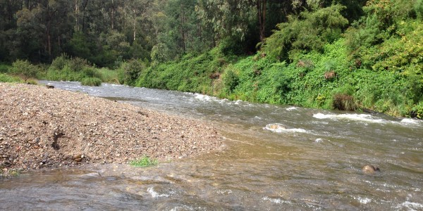 Thomson River at Coopers Creek during October 2014 water release