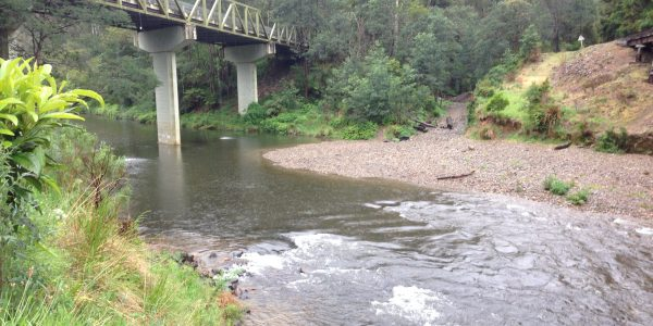 Thomson River at Walhalla Rd Bridge during October 2014 water release
