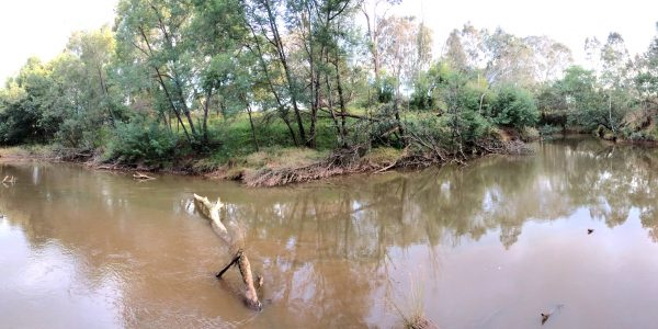 Macalister River at Bellbird Corner before a winter release