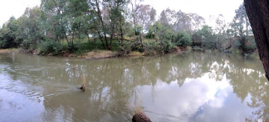 Macalister River at Bellbird Corner during a winter high flow
