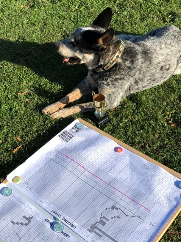 Bluey and the grazing charts kept by David Hall