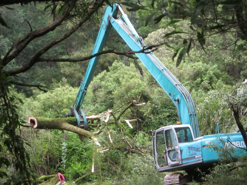 Excavator removing willow tree