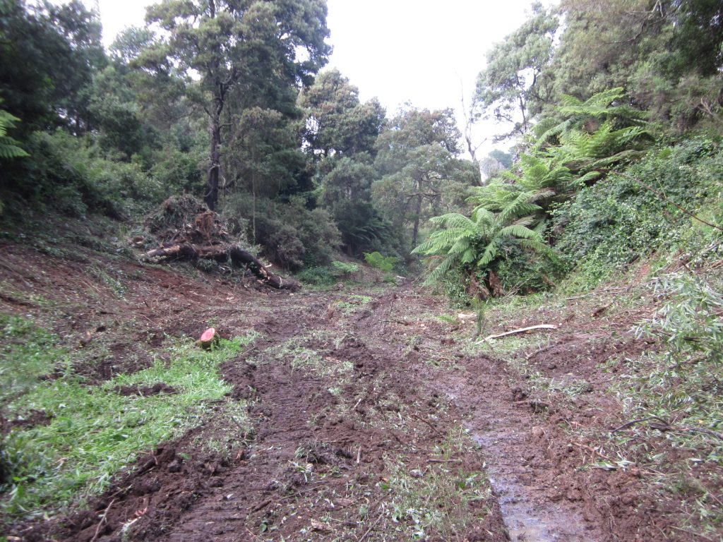 Gully cleared of willows