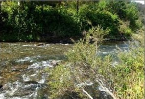Thomson River near Coopers Creek campground before a water release for the environment.