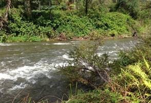 Thomson River near Coopers Creek campground during a water release for the environment where flow is at its highest. Note that water level and flow rate have increased. This makes it easier for fish to move along the river channel.