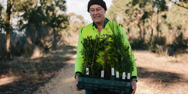 A dedicated member of Landcare and a tray of indigenous trees.