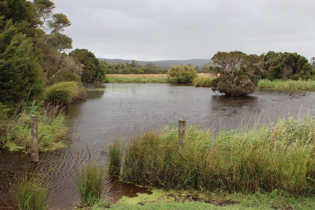 A small part of the wetlands at the Davies property - restored over 40 years.