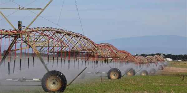 Pivot irrigation on a farm at Dennison in the Macalister Irrigation District